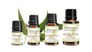 Eucalyptus Globulus Essential Oil 100% Pure and Natural Quality