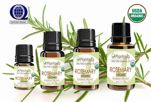 Rosemary Spanish Organic Essential Oil 100% Pure Therapeutic Grade