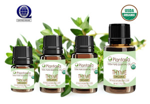 Thyme Organic Essential Oil 100% Pure and Natural Therapeutic Grade Aromatherapy