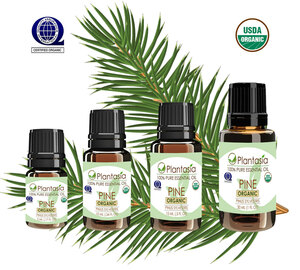 Pine Organic Essential Oil 100% Pure and Natural Therapeutic Grade Aromatherapy
