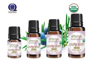 Juniper Berry Organic Essential Oil 100% Pure and Natural Therapeutic Grade Aromatherapy