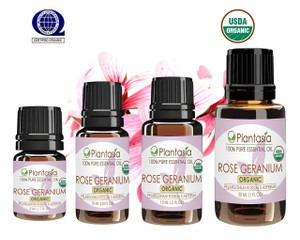 Rose Geranium Organic Essential Oil 100% Pure and Natural Therapeutic Grade Aromatherapy