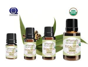 Eucalyptus Globulus Organic Essential Oil 100% Pure and Natural Therapeutic Grade Aromatherapy