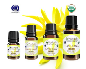 Ylang Ylang Organic Essential Oil 100% Pure and Natural Therapeutic Grade Aromatherapy