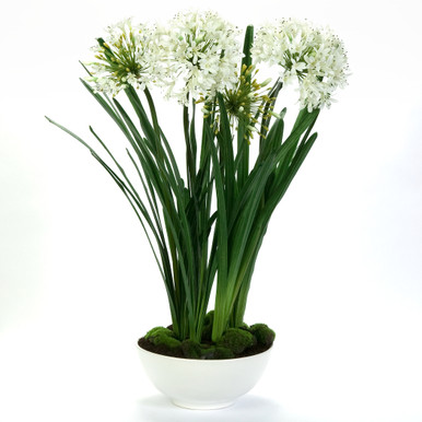 Faux Potted Agapanthus