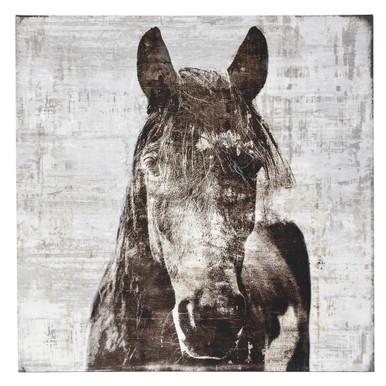 Winter Stallion
