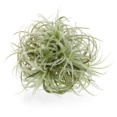 Faux Airplant Sphere