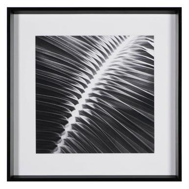 Palm Noir 3