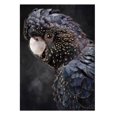 Banksian Cockatoo