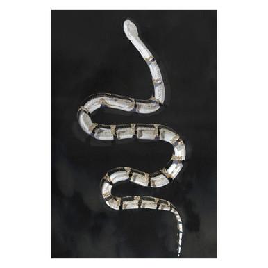 Parisian Snake Fierce