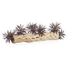 Faux Aeonium Succulent Pick - Set of 3