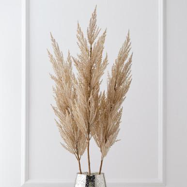 Pampas Grass - Set of 3