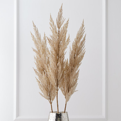 Pampas Grass - Set of 3
