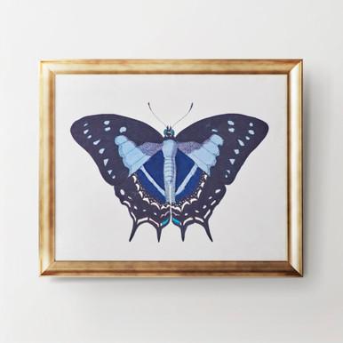 Beautiful Butterfly 3