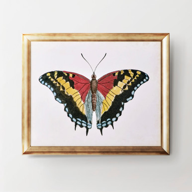 Beautiful Butterfly 4