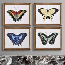 Beautiful Butterfly 4