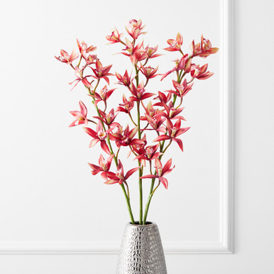 Cymbidium Spray - Set of