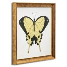 Beautiful Butterfly 1