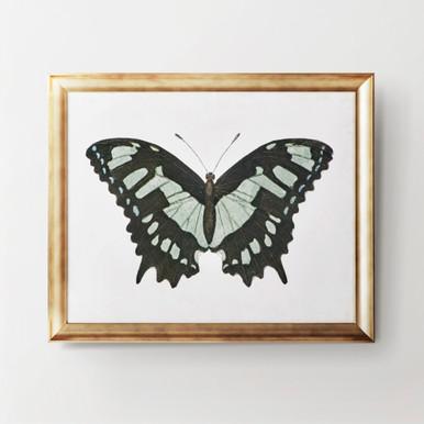 Beautiful Butterfly 2