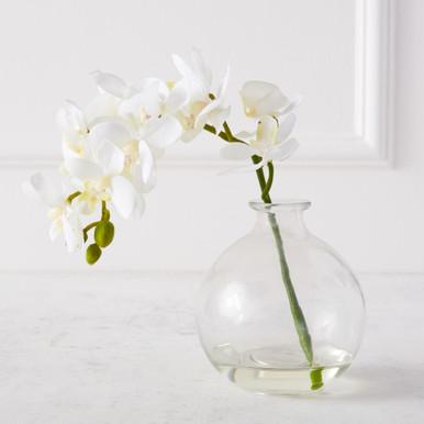 Phaleanopsis 1 Stem With Glass