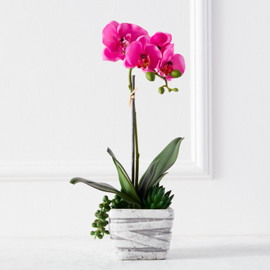 Phaleanopsis Spray In Cement Pot