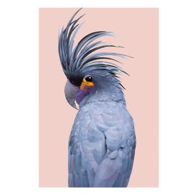 Blue Exotic Cockatoo