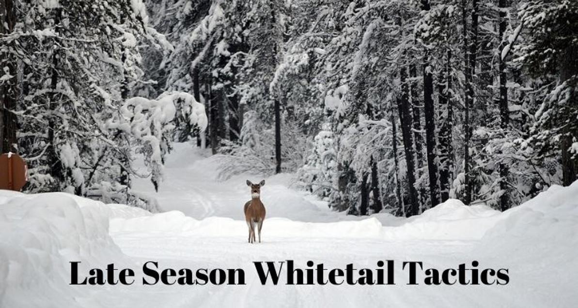 Late Season Whitetail Tactics