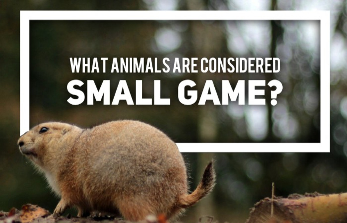What Animals are Considered Small Game?