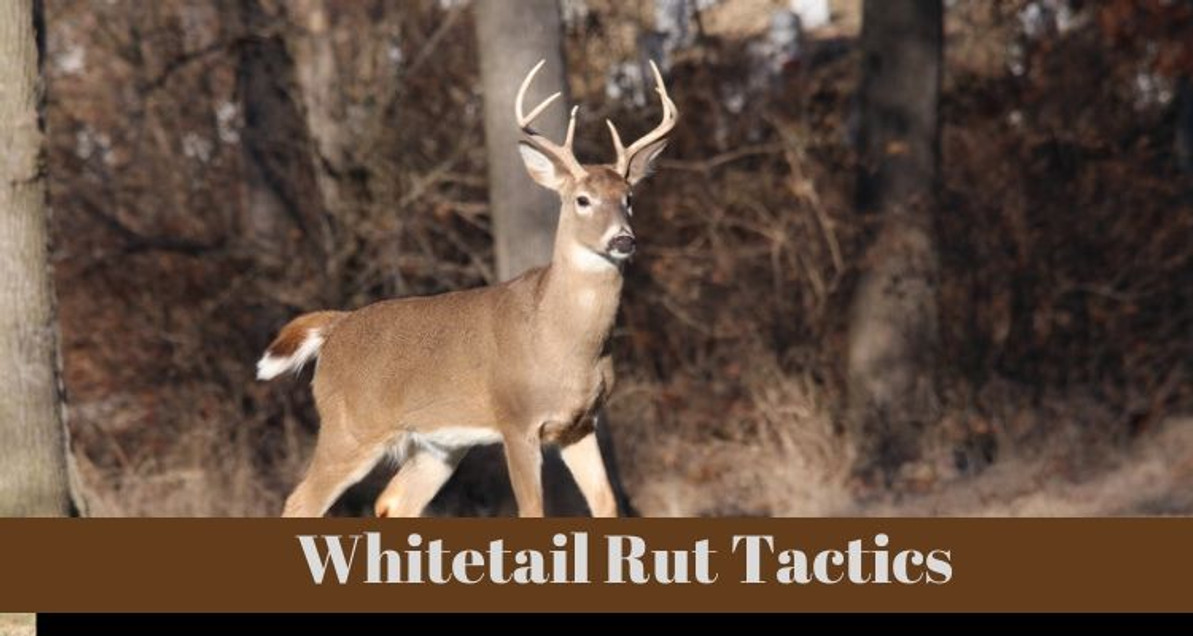 Tactics And Tools For The Whitetail Rut Season
