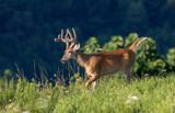 Best Practices for Deer Hunting Land Management