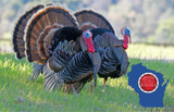 2021 Turkey Hunting Opener and Regulations In Wisconsin