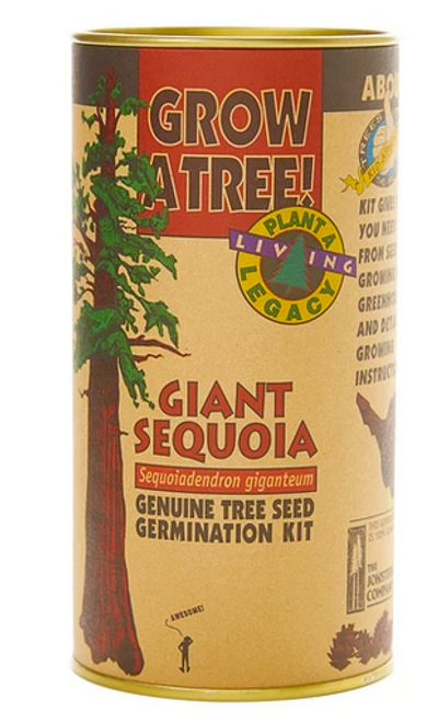 Giant Sequoia | Seed Grow Kit
