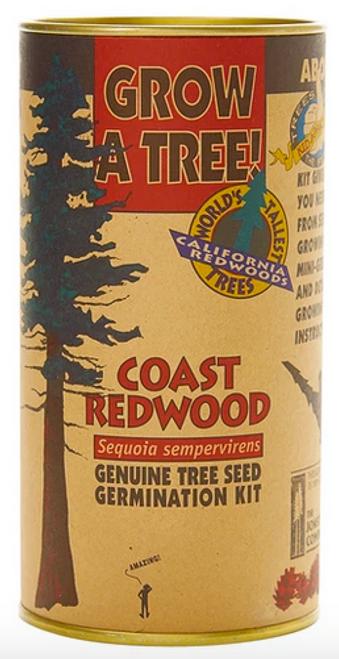 Coast Redwood | Seed Grow Kit