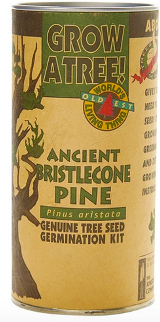 Ancient Bristlecone Pine | Seed Grow Kit