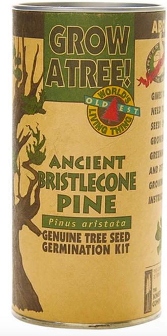 Ancient Bristlecone Pine | Seed Grow Kit