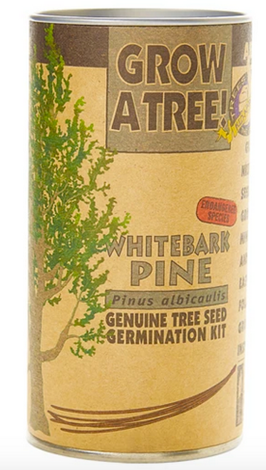 Whitebark Pine | Seed Grow Kit