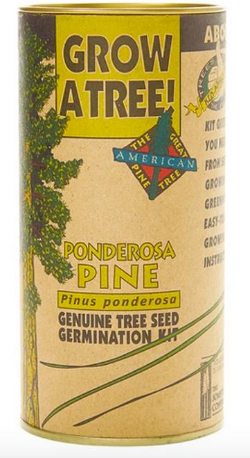 Ponderosa Pine | Seed Grow Kit