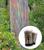 Rainbow Eucalyptus   Mini-Grow Kit