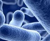 Ozone and Listeria