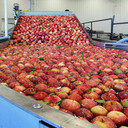 Ozone Use in Apple Processing