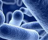 Listeria Treatment with Ozone