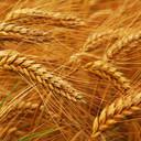 Influence of Tempering with Ozonated Water on the Selected Properties of Wheat Flour
