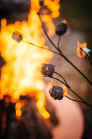 Marshmallow Roasting Art