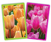Spring Tulips - Double Deck Jumbo Index Playing Cards by Springbok
