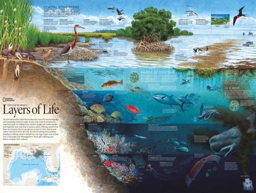 Layers of Life - 1000pc Jigsaw Puzzle by New York Puzzle Company