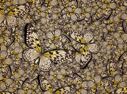 Butterfly Bonanza - 1000pc Jigsaw Puzzle By Serious Puzzles