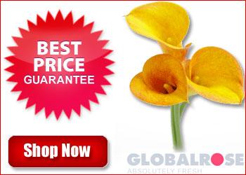 globalrose-350x250-red.jpg
