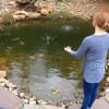 Pond Sludge Digester - Easy Application