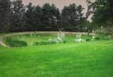 Every Pond Owner's Nightmare: Green Water Algae