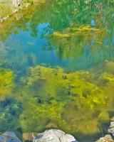 Algae Scum in My Pond